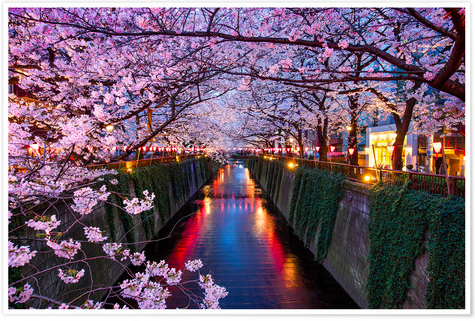 Cherry Blossoms Tokyo Posterlounge